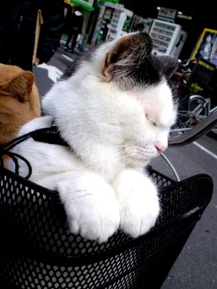 cat_okachimachi002